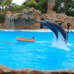 Delfíni vozí holčičku na lodi