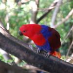 Papoušek I.