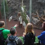 S papoušky Kakadu
