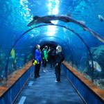 V podvodním tunelu se žralokem